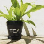 TCA Staff